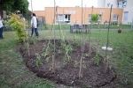 potager EHPAD magnolias - 18 06 2020